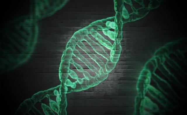 """""""Felelőtlenség"""" lenne humán reprodukciós célokra használni a génszerkesztést"""