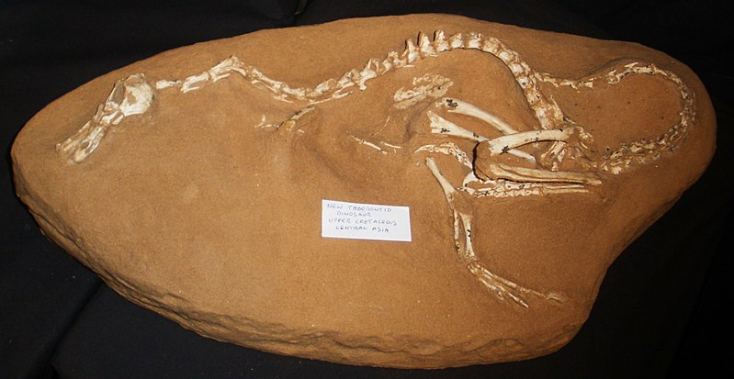 Bizarr külsejű apró dinoszaurusz élt 75 millió éve a Földön