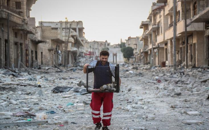 Éhező állatokat ment a háború sújtotta Szíriában egy férfi