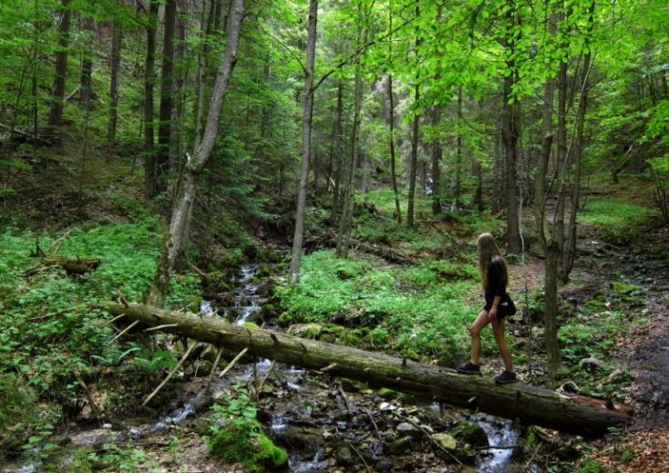 Tilos a fakitermelés a nemzeti parkokban