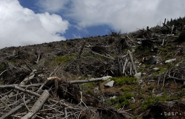 Csaknem kétezer fát csavart ki a szélvihar a Tátrában