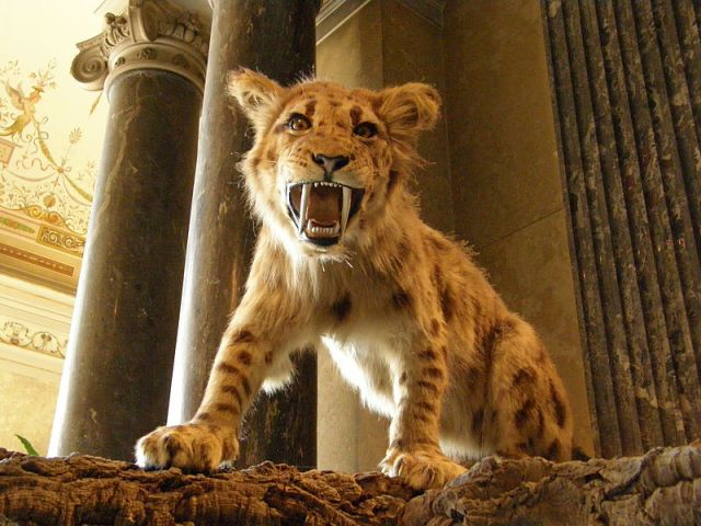 Nem az ősember irthatta ki Afrika hatalmas növényevő emlőseit