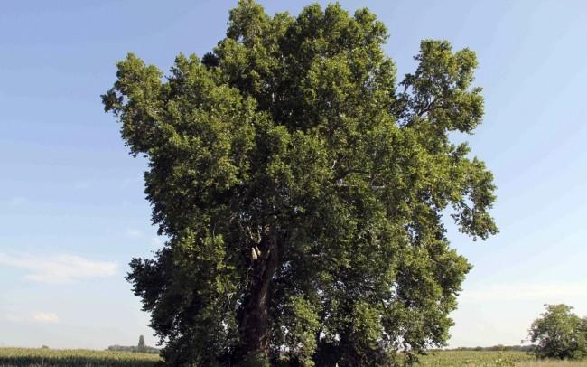 Szlovák faültetési rekord született a fák világnapján