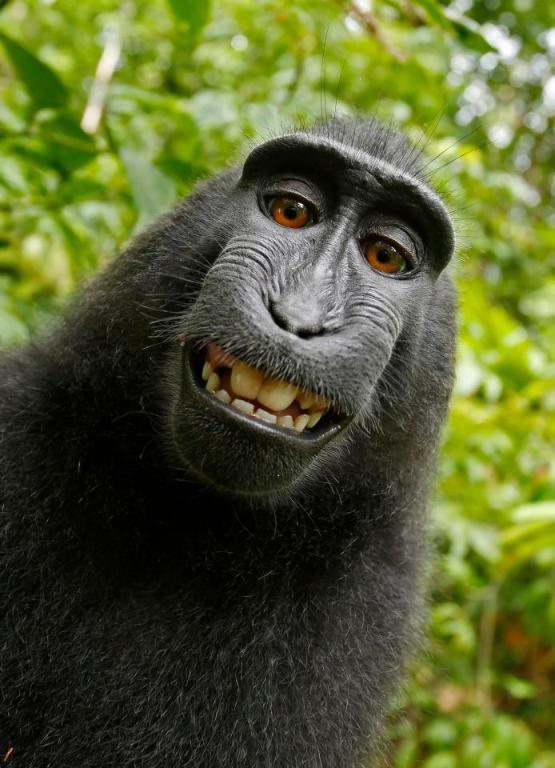 """A fotós nyerte meg a """"majomszelfipert"""""""