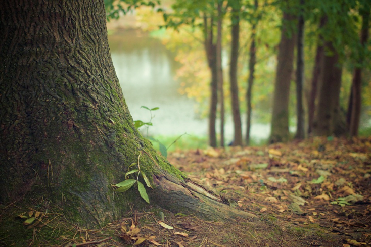Rohamosan tűnnek el az erdőterületek Délkelet-Ázsiában