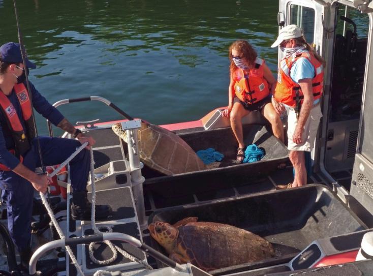 Meggyógyítottak, majd visszaengedtek a tengerbe két bajba jutott tengeri teknőst– VIDEÓ