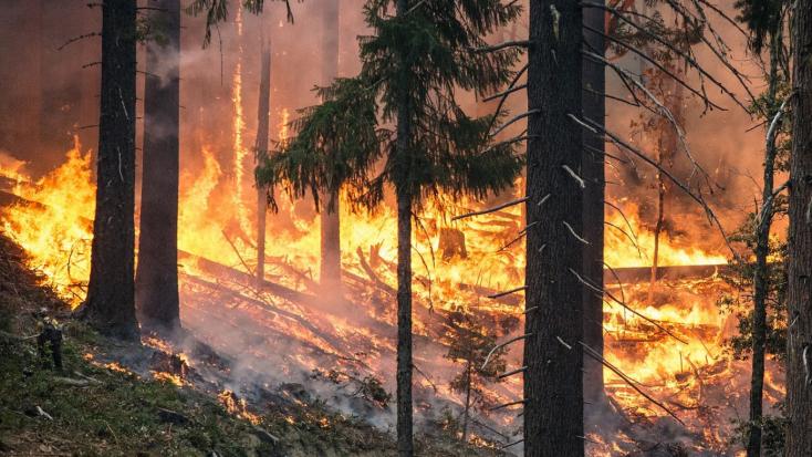 Továbbra is harcolnak az erdőtüzek ellen Oroszországban