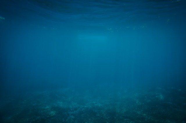 A mélytengerek óriási mértékű faji sokszínűségét és helyi különbözőségeit tárták fel tengerbiológusok