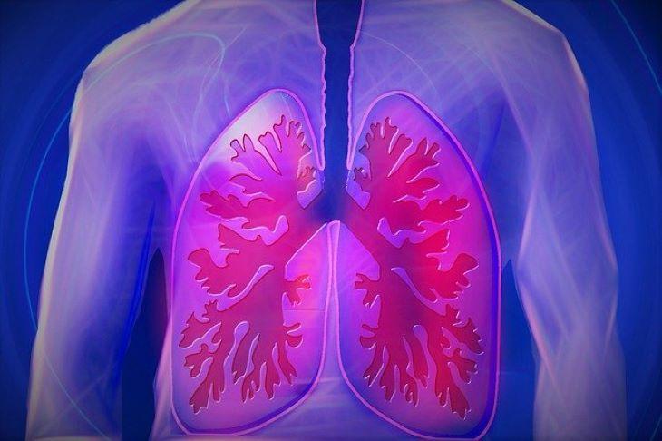 Úttörő műtéti módszer négyszerezheti meg a tüdő- és szívátültetéseket