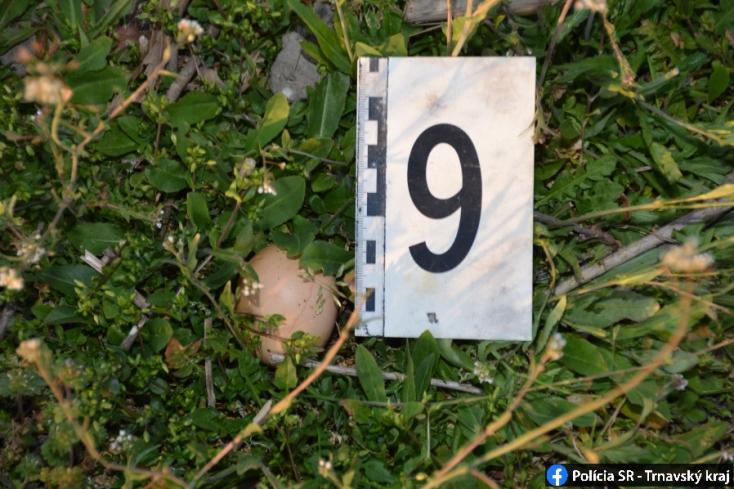 Több tucat mérgezett tojásra bukkantak Nyárasdnál