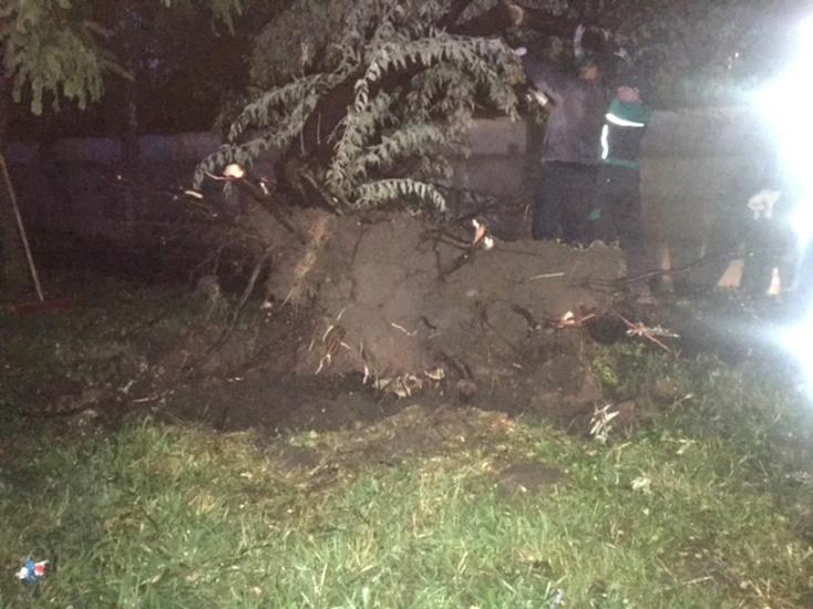 Elemi erővel csapott le a vihar, fákat csavart ki tövestől!