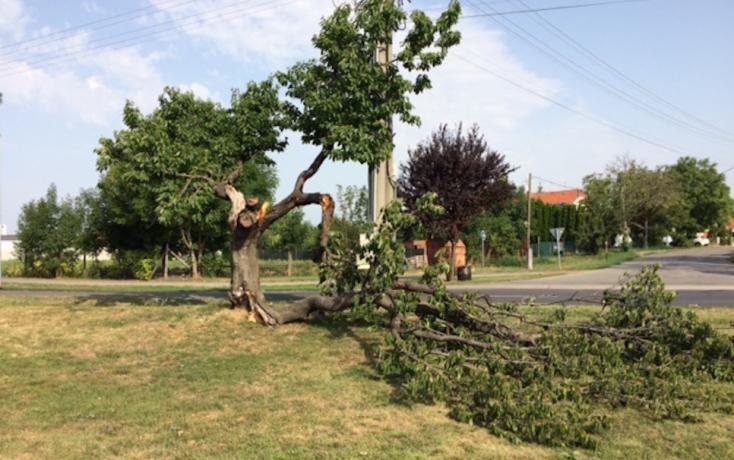 Hatalmas vihar tombolt – fákat csavart ki a szél a Csallóközben!