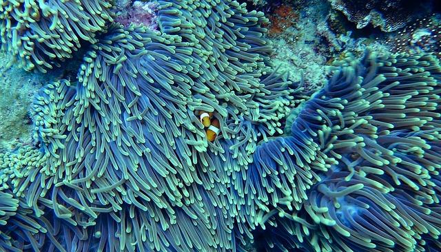 Bizonyos korallszigetek ellenállóak a klímaváltozással szemben