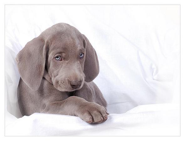 Kártevőket kiszagoló kutyával védi gyűjteményét egy amerikai múzeum