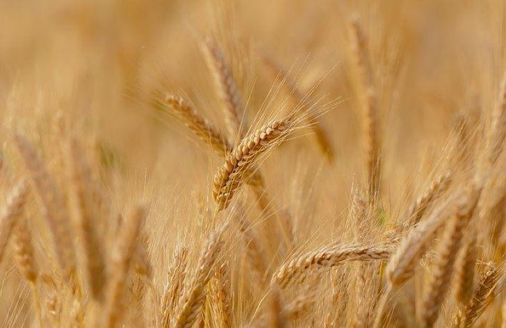 Ősi fogkőben talált mikrobák utalnak a mezőgazdaság európai terjedésére